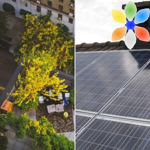 New commercial buildings in France must have green roofs or solar