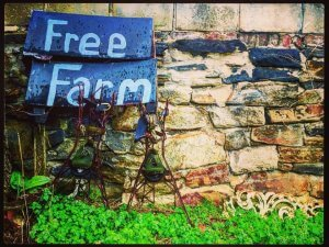 Baltimore Free Farm Turns Trash into Free, Healthy Food